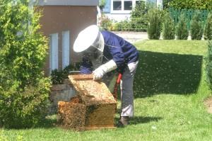 beekeeper-215186_1280